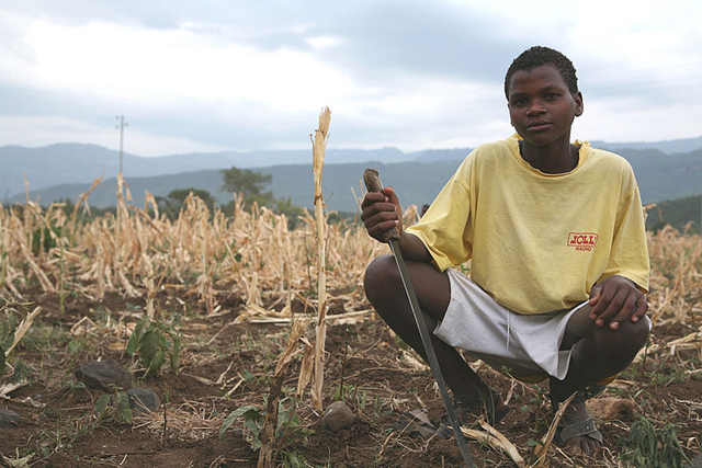 An Ethiopan boy works a field of crops that's been withered by the 2011 drought, 21 July 2011. USAID / wikipedia.org