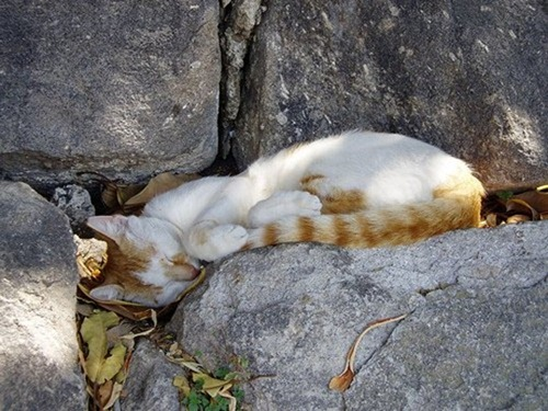 Cats Will Sleep Anywhere 23