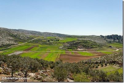 Judean hills near Guvrin Valley, tb030407741