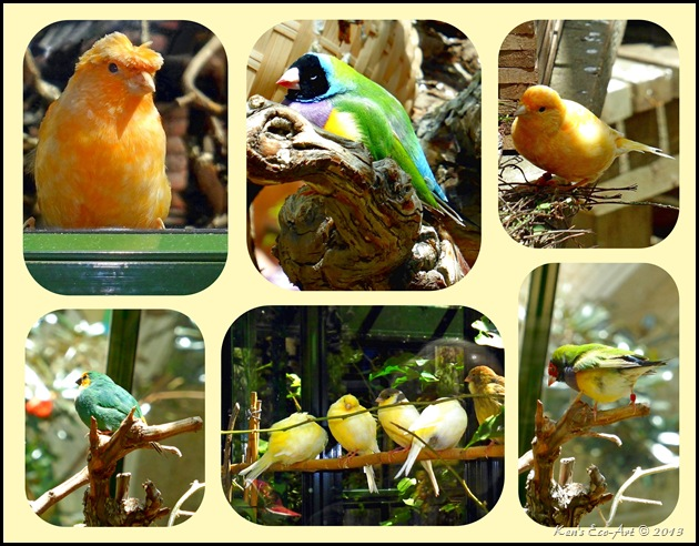 Bellagio Bird Collage-2