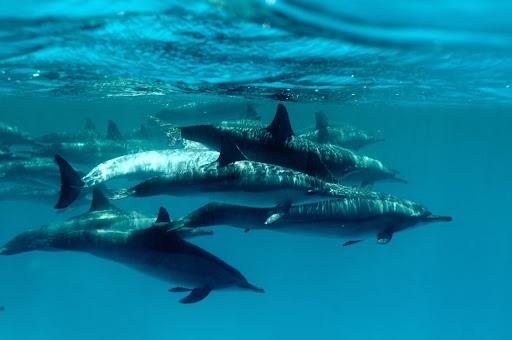 rontu aru island of the blue dolphins