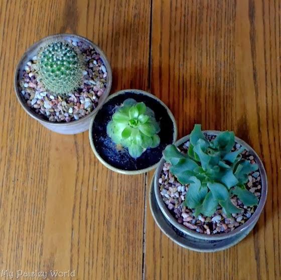 succulent15