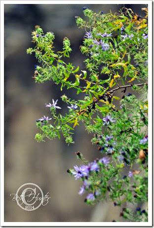 cr-flower