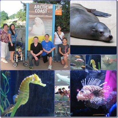 Mystic Aquarium (401x401) (2)