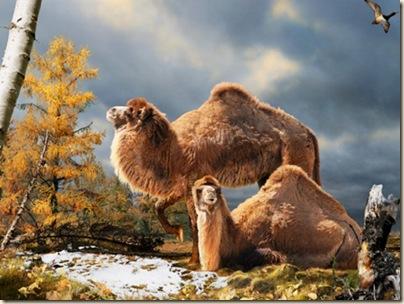 ancient-camels