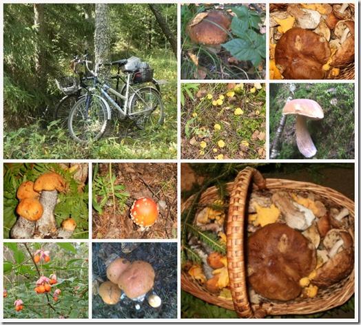collage_грибы