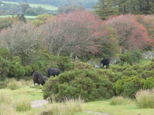 spirituele-reis-dartmoor-engeland-72.JPG