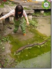 水生池中的微棲地-枯木