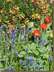 garden colours 010