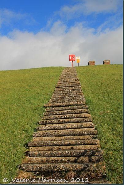 42-steps