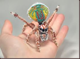 Amazing Pictures of Animals, photo, Nature ,exotic, funny, incredibel, Zoo, Maratus volans,  Peacock spider or Gliding spider, Alex (4)
