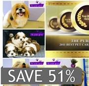 Pets Purple Groom