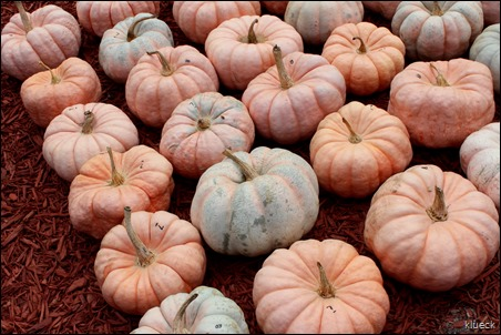 Burts Farm, pumpkin patch, Dawsonville, GA
