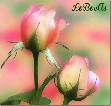 rosas-rosa-LoBocAs-1004