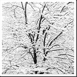 Jeffrey_Conley_Snow_Covered_Branches