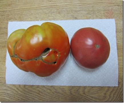Brandywine and Cherokee Purple tomatoes