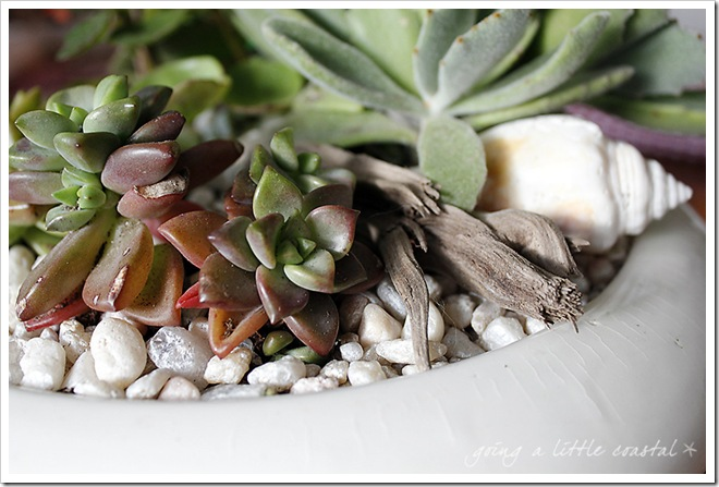 succulents6_edited-1