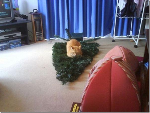 Gatos odeiam o natal (15)