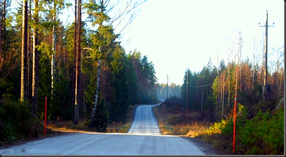 suomalainen syys metsä suppilovahvero 010