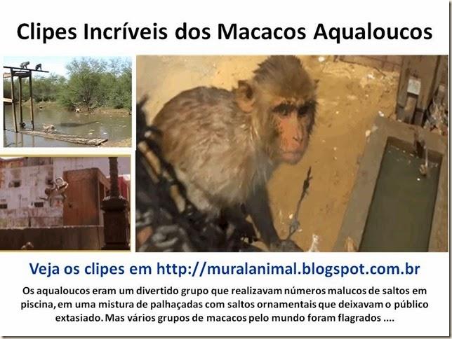 macacos-aqualoucos