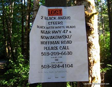 Lost Black Angus
