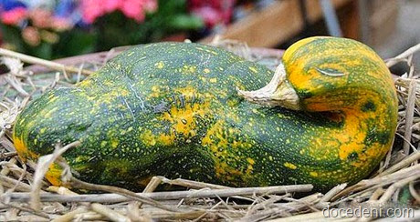 legumes e formas3
