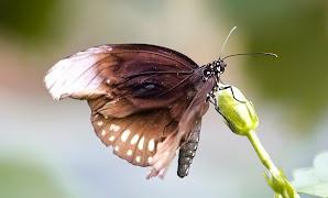 2013-4-25-vlinder5.jpg