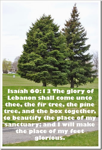 8 Tree