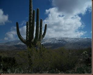 Saguaro02