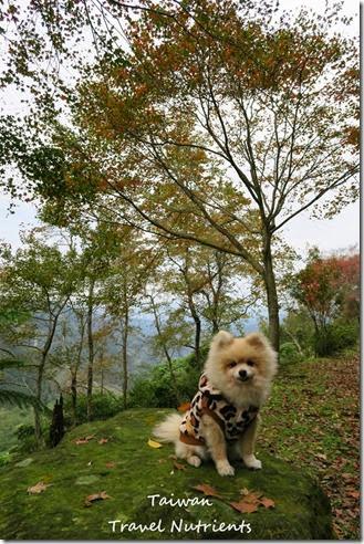 三峽熊空茶園 (44)