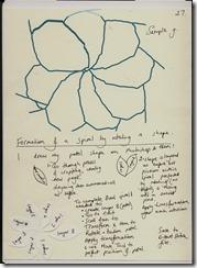 ch 2b rotating petals 1