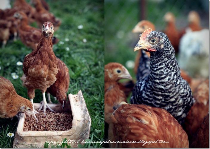Ptaki mojej mamy1