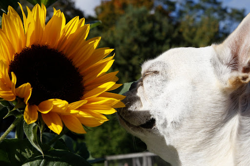 They don't call these sunflowers for nothing - they're blindly bright!
