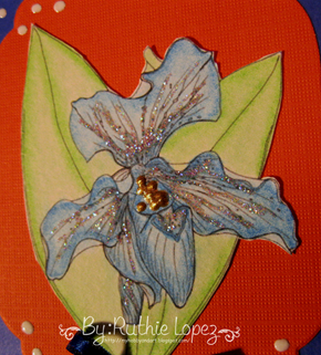 Slipper orchid - Sunshine mail - Hope Jacare. 2