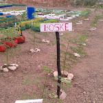 Haiti- Urban Agriculture- Tap Tap Garden Inaguration Prep- 01/2012