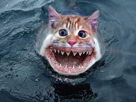 1014 7 226 2007 Amazing Photoshopped Animals Pics