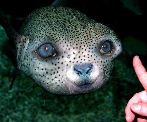 1014 10 226 2007 Amazing Photoshopped Animals Pics
