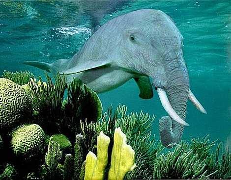 1014 16 226 2007 Amazing Photoshopped Animals Pics