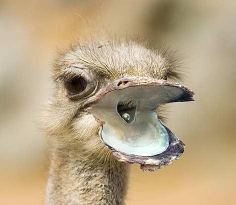 1014 23 226 2007 Amazing Photoshopped Animals Pics