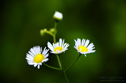 Three and one Beautiful Flower Photography