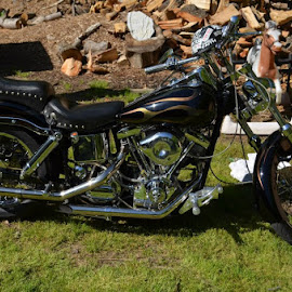 '80 Shovelhead by Missy Moss - Transportation Motorcycles (  )