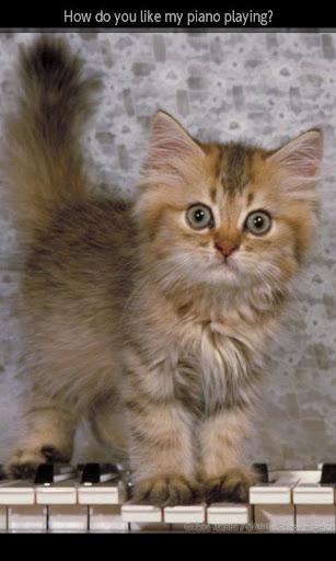 【免費書籍App】ipiks Love cats 4-APP點子
