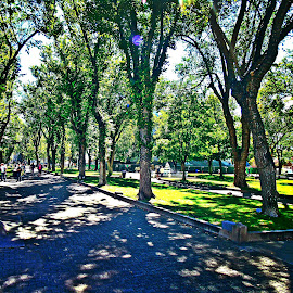 Prescott park by Stephen Schwartzengraber - City,  Street & Park  City Parks ( park, grass, arizona, trees, people )