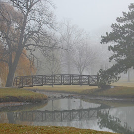 Bridge in the Fog by Erin Czech - City,  Street & Park  City Parks ( reflection, south park, fog, trees, bridge )