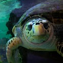 The turtles wallpaper01
