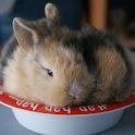 Cute Bunnies Live Wallpaper icon