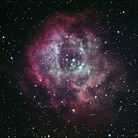 The Rosette Nebula by Bill Schlosser - Landscapes Starscapes ( nebulas, storm, stormy, weather,  )