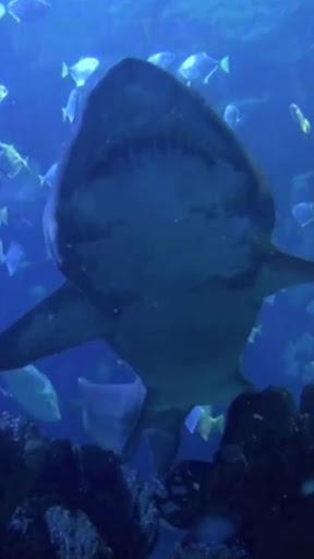 大白鯊攻擊高清