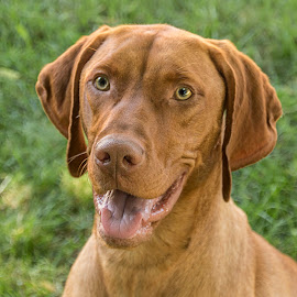 Happy Dog by Sue Matsunaga - Animals - Dogs Portraits