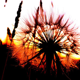 Sunrise by Terry Hairston - Nature Up Close Other Natural Objects